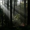 Platz 9 - Licht im Wald - Fotograf Siegfried Mischke