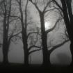 Platz 10 - Bäume im Nebel - Fotograf Siegfried Mischke