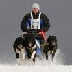 Platz 4 - Happy Dogs - Fotograf Dr. Herwig Hertel