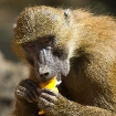 Platz 7 - Affenmahl - Fotograf Martin Lopez