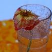 Platz 7 - Wasserglas - Fotograf Siegfried Mischke